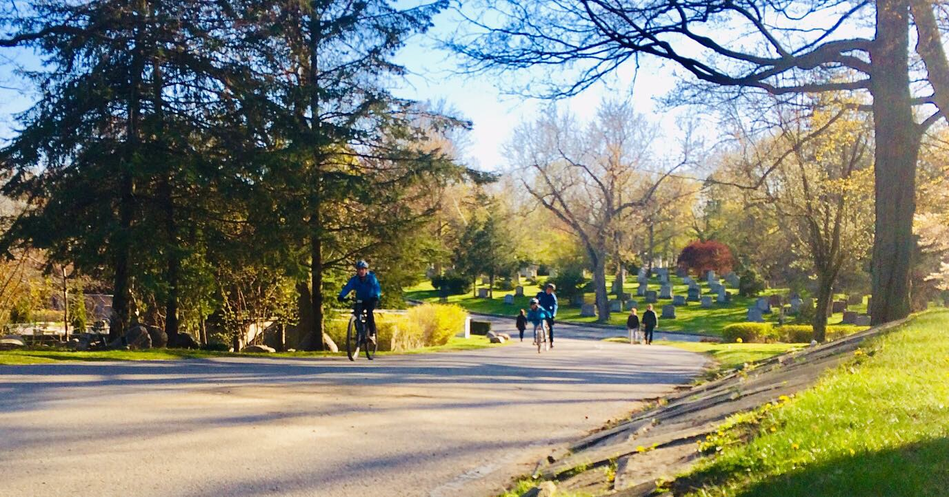 A photo of people walking and biking on a wide path beneath tall trees in the sun light.